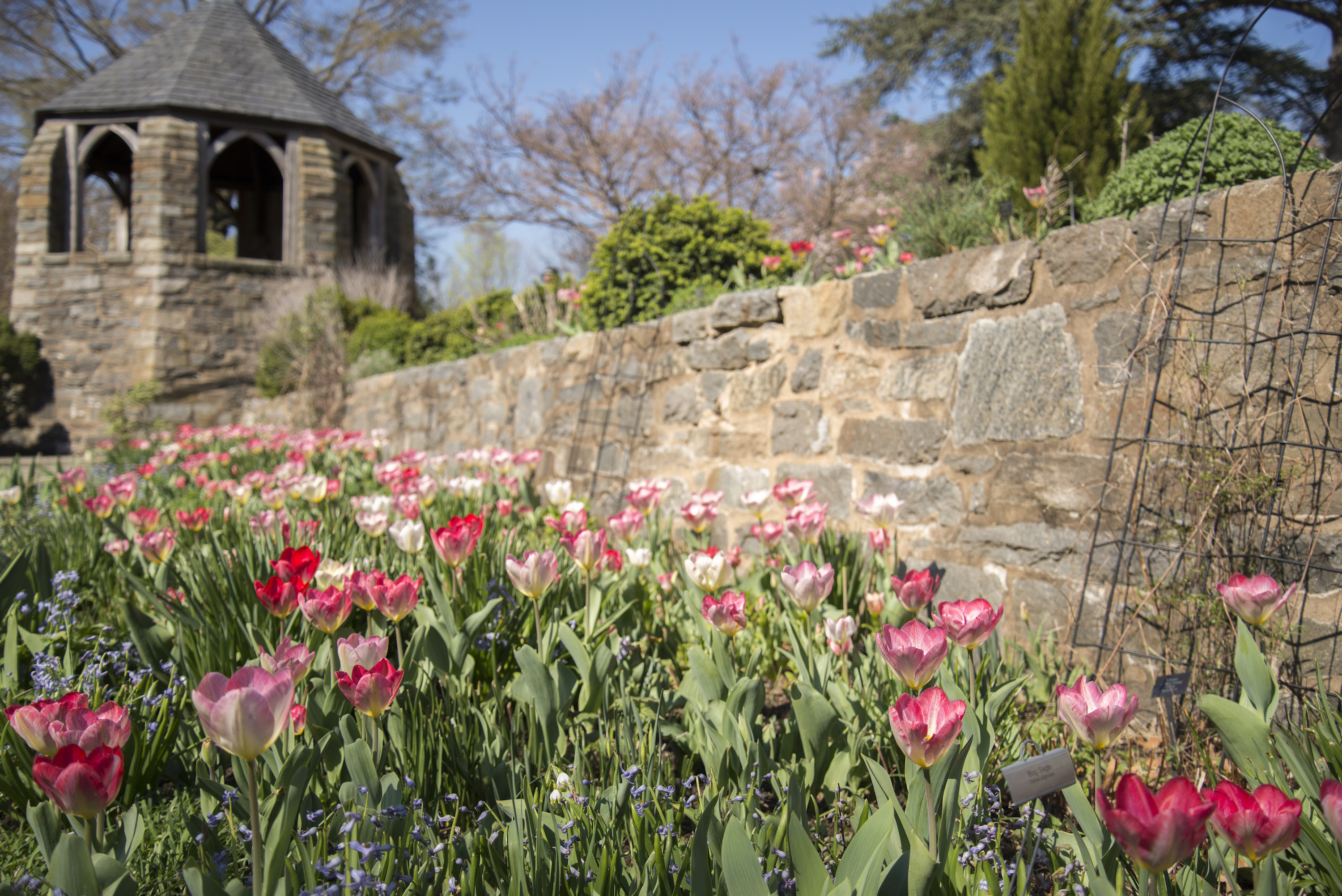 gardens and grounds washington national cathedral